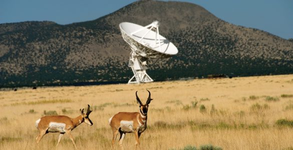 Pronghorns and VLA antenna