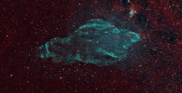 W50: The Manatee Nebula