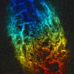 Invisible Colors: Why Astronomers Use Different Radio Bands